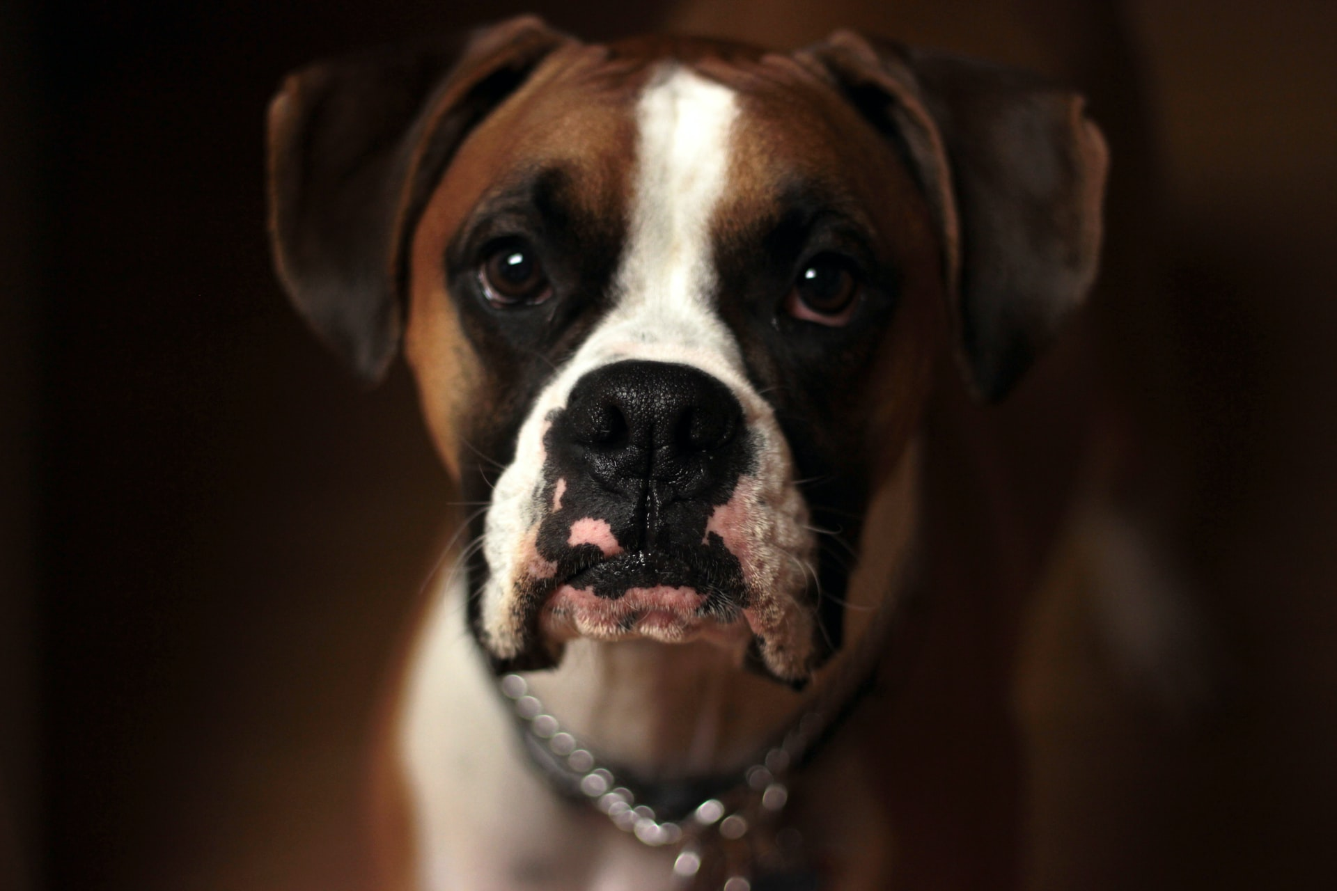 Medical Records Matter In a Dog Bite Injury Claim (Here's Why)